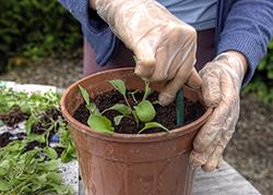 Biokräuter anpflanzen